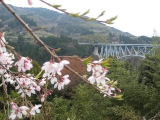 葉桜&青雲橋