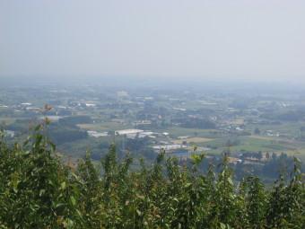 梅畑から見下ろす川南町