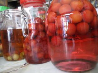 きれいに色が出だした桃シロップ&桃酒